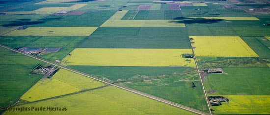 In Saskatchewan, the sprayed agricultural surface area is enormous.