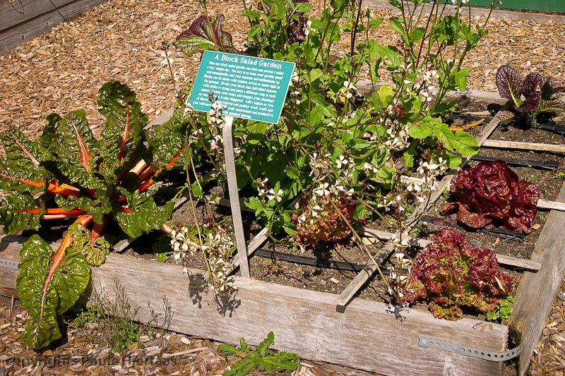 Organic garden demonstration, Mendocino botanical garden, Mendocino, California is one of the official testers for Rodale's  Organic Gardening